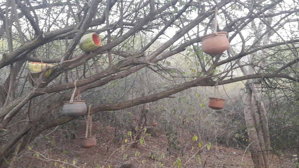 birds lover manu, jogimatti